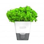 Conservateur Cole & Mason pour herbes fraiches en pot - 1 place