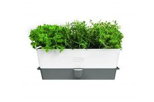 Conservateur Cole & Mason pour herbes fraiches en pot - 3 places